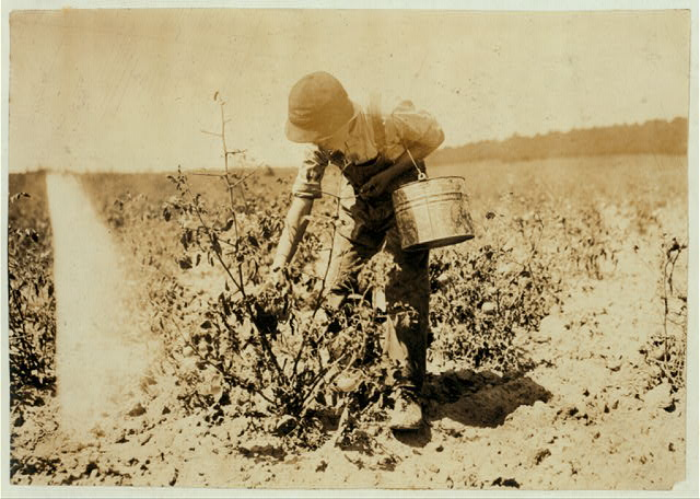 13-year old boy picking tomatoes on farm of W.T. Hill.  Location: Cabool, Missouri