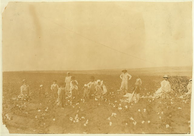 Benton Hill, a renter, Tinney, Okla. Two other families were helping Mr. Hill and his children pick his cotton. Four adults and 10 children of following ages: 1 boy of 3 years, 2 boys and 1 girl of 5 years, 1 boy and 1 girl of 7 years, 1 boy of 8, 1 boy of 9 years, 1 girl of 11 years and 1 boy of 15 years. Everyone had a sack and was picking industriously. The parents said that Fred, 3 years old, sometimes picks 20 pounds a day and Vera, 5 years old, picks 25 pounds a day. See photos of Fred and Vera.  Location: Comanche County, Oklahoma
