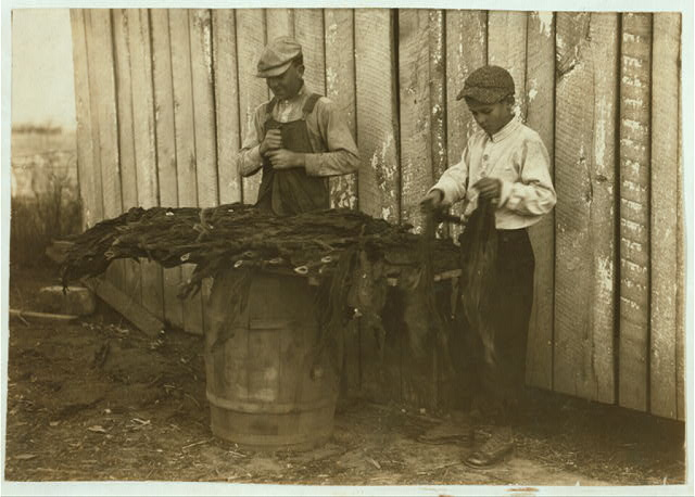 [c/o W.A. Daniel - Route 2 - Woodburn, Ky. Lester Daniel, [...] years old and 17-year old cousin stripping tobacco. See Kentucky report and special card.]  Location: [Woodburn, Kentucky]
