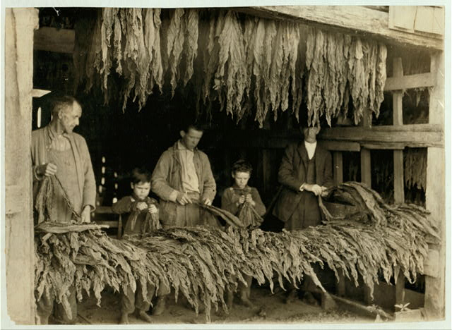 "[B.F. Howell, Route 4, Bowling Green, Ky. and part of his family stripping tobacco. The 8 and 10-year old boys in photo ""tie up waste""; his 12-year old boy and 14-year old girl (not in photo but they lose a good deal of schooling for work) are regular strippers. Photo taken during school hours.]  Location: [Bowling Green, Kentucky]"