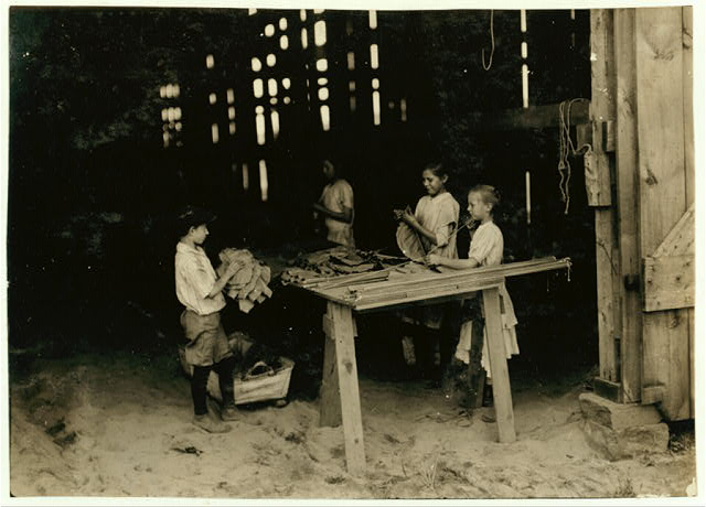 "10 year old leaf boy and three ""stringers"" 10, 12, and 13 years old. Tobacco shed of American Sumatra Tobacco Co. In these two sheds were 41 girls and boys from 10 to 15 years old, and only 24 girls and women of 16 years and over. The leaf-boys get $1.50 a day and some of the stringers of 10 and 12 make $1.20 a day, according to the Supt.  Location: S[outh] Windsor, Connecticut"