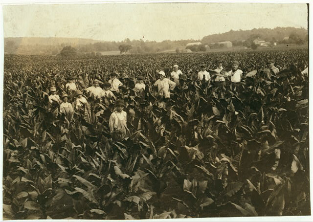 Field-workers, Goodrich Tobacco Farm, near Gildersleeve, Conn. See Report, L.W. Hine.  Location: Gildersleeve, Connecticut.