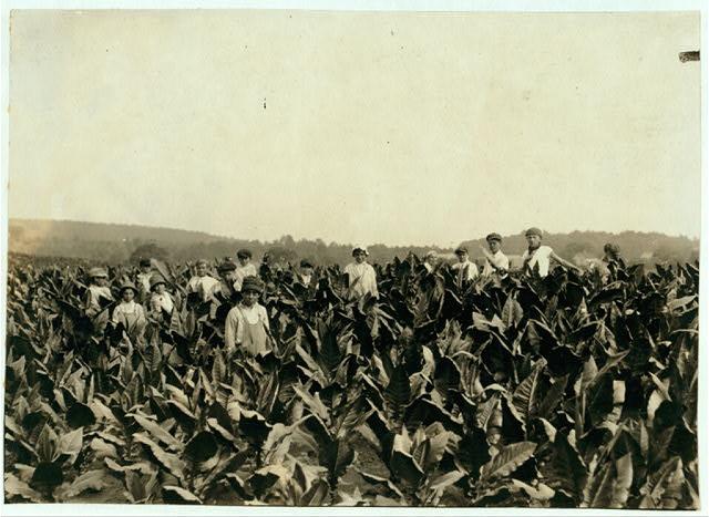 Field-workers, Goodrich Tobacco Farm, near Gildersleeve, Conn. See Report.  Location: Gildersleeve, Connecticut