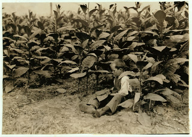9 year old picker for the American Sumatra Tobacco Co., (See 4899). Location: Weatogue, Connecticut.