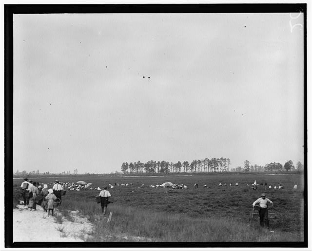 General View, Whites Bog, Browns Mills, N.J. This is the fourth week of school and the people here expect to remain two weeks more. E.F. Brown [Witness].  Location: Browns Mills, New Jersey.