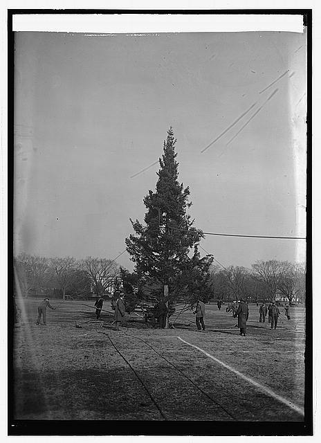 Community Christmas tree, [12/24/23]