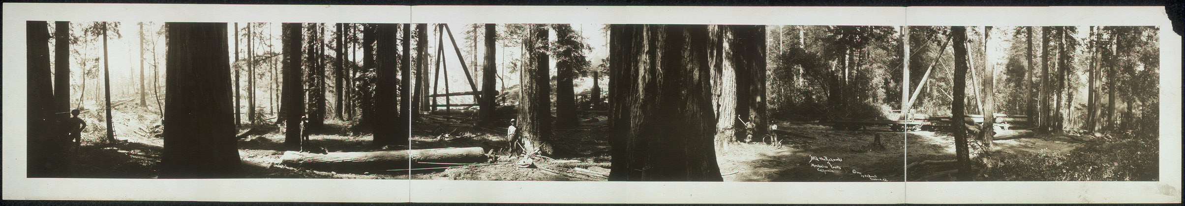 'Mid the redwoods of Mendocino County, California
