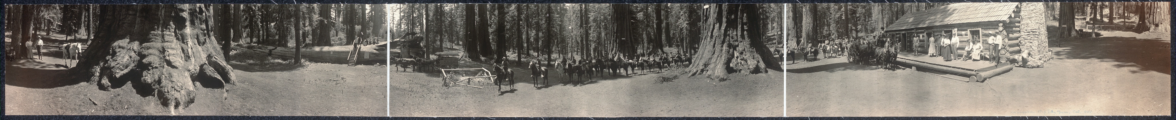 Mariposa Big Tree Grove, Cal. 1908