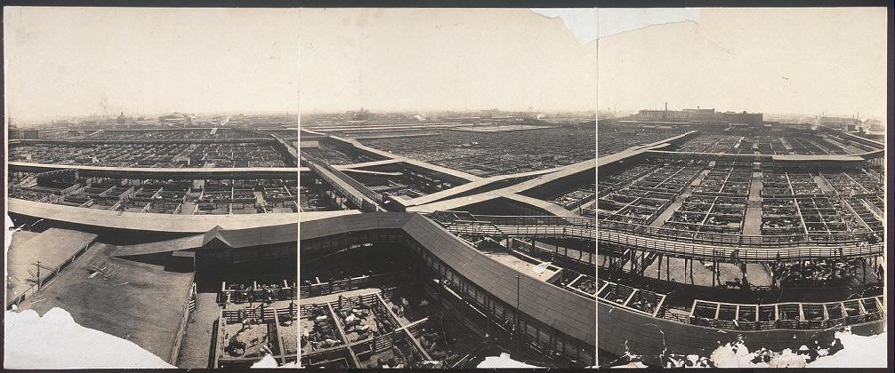 [Union Stock Yards, Chicago, Ill.]