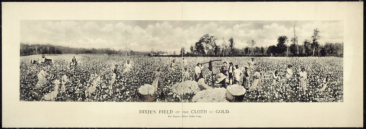 Dixie's field of the cloth of gold. The nation's billion dollar crop