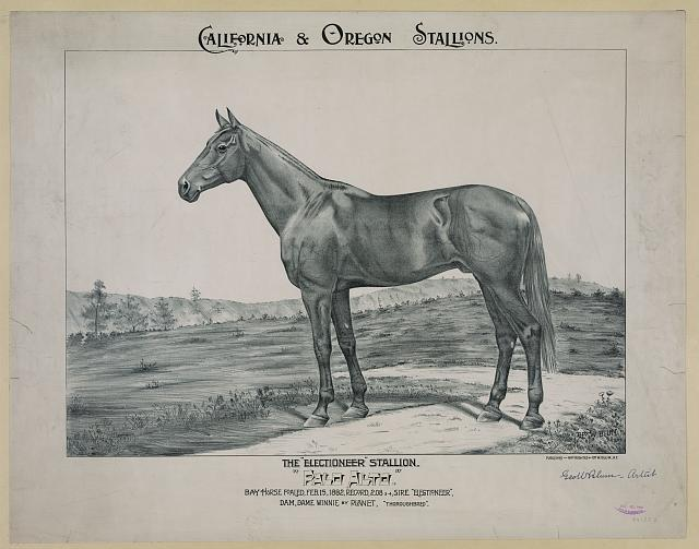 "The ""Electioneer"" stallion, ""Palo Alto"""