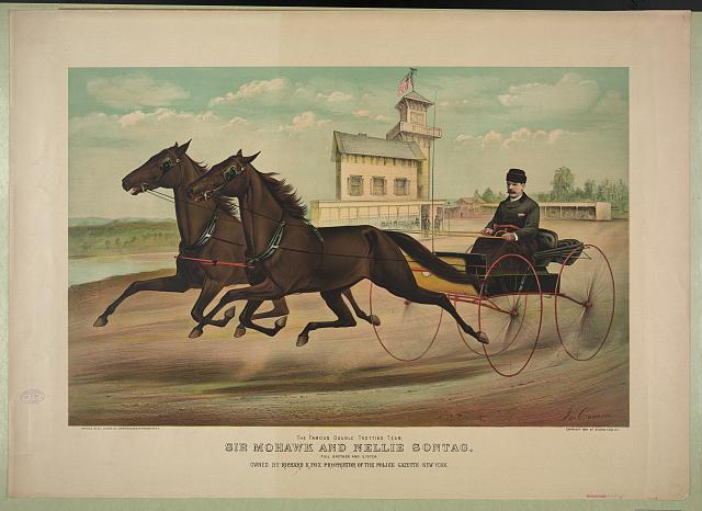 The famous double trotting team, Sir Mohawk and Nellie Sontag: full brother and sister