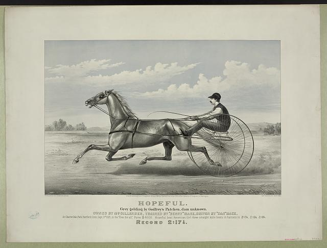 Hopeful: grey gelding by Godfrey's Patchen, dam unknown