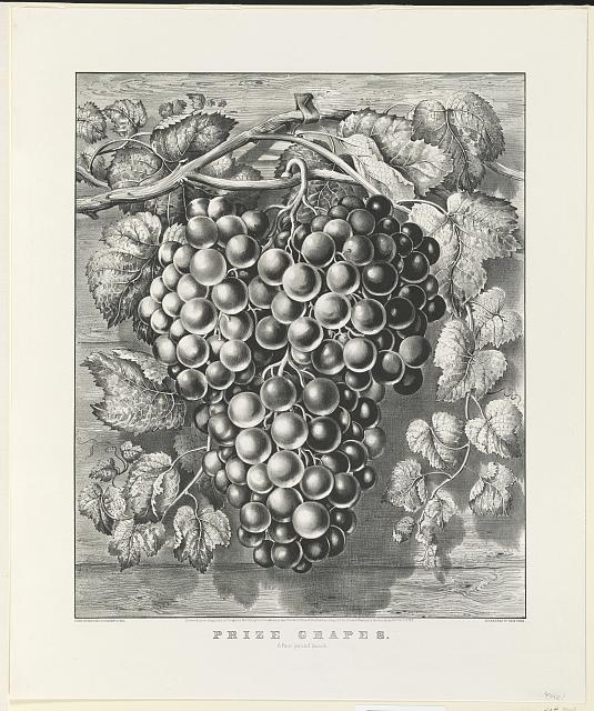 Prize grapes: a four pound bunch