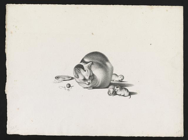 [Domestic cat with three newborn kittens and a saucer of food on the left]
