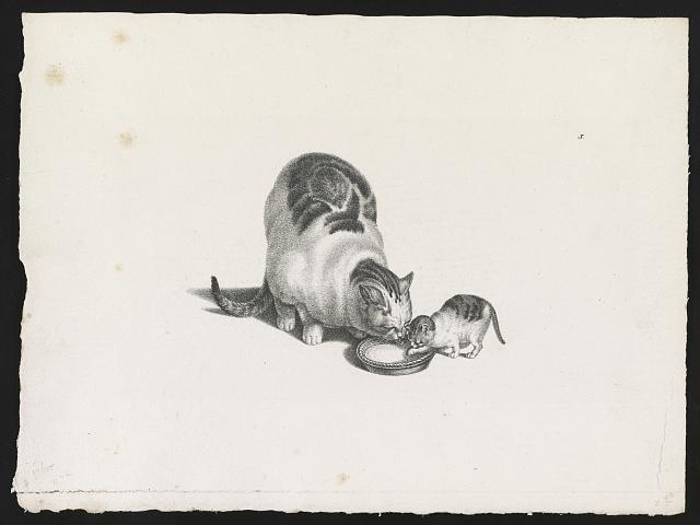 [Domestic cat and kitten drinking milk from a saucer]