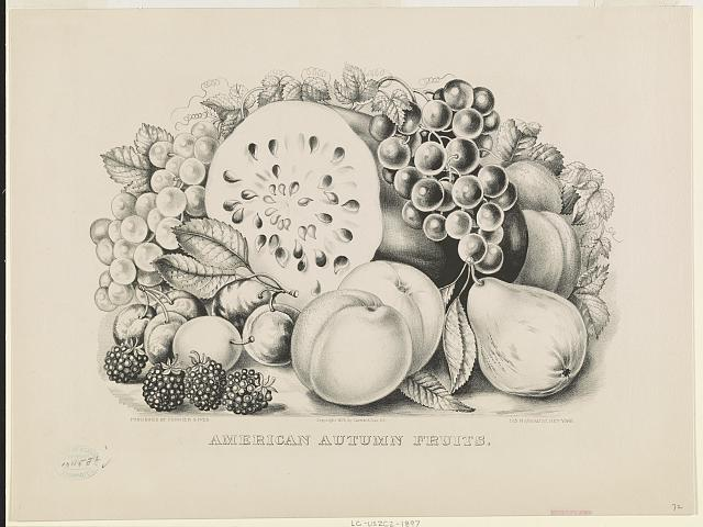 American autumn fruits