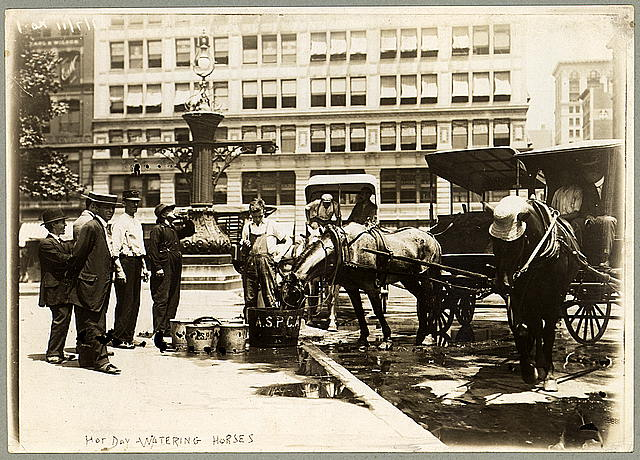 [Watering horses on a hot day]