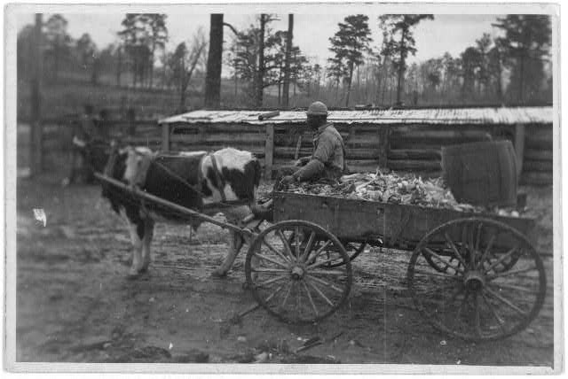 [Farm wagon, driven by an African American man, Reed Camp, South Carolina]