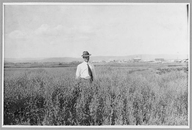 Mr. Rickert in grain field on his farm