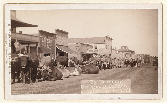 Ox teams at Sturgis, D.T. [i.e. Dakota Territory]