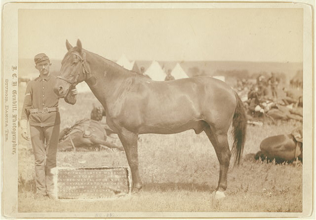 """Comanche,"" the only survivor of the Custer Massacre, 1876. History of the horse and regimental orders of the [7]th Cavalry as to the care of ""Comanche"" as long as he shall live"