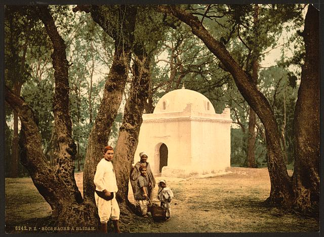 [The sacred wood, Blidah, Algeria]
