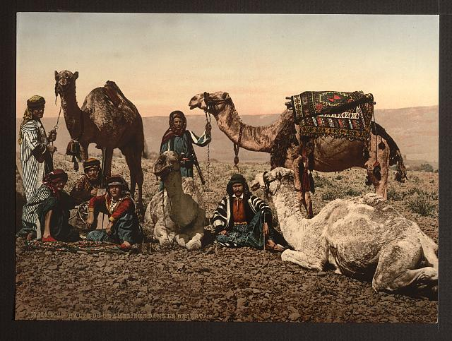 [Camels halting in the desert, Holy Land]