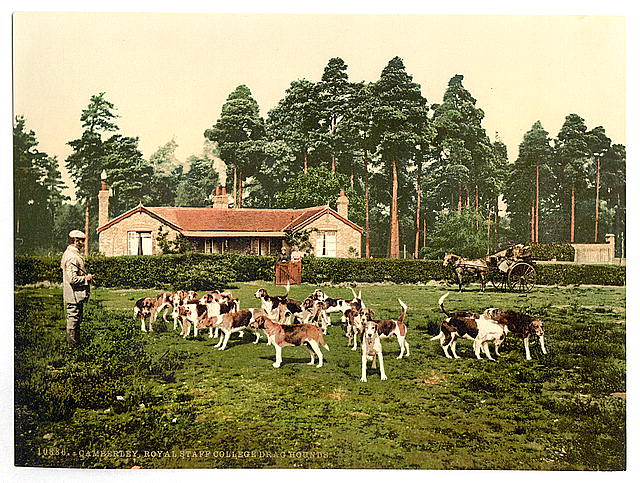 [Royal Staff College, drag hounds, Camberley, England]