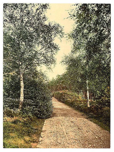[Brackendale, the drive, Camberley, England]