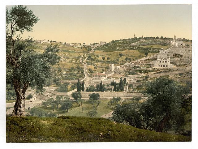 [Mount of Olives and Gethsemane, general view, Jerusalem]