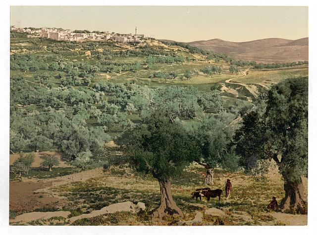 [General view, Samaria, Holy Land, (i.e., Sabastiyah, Israel)]
