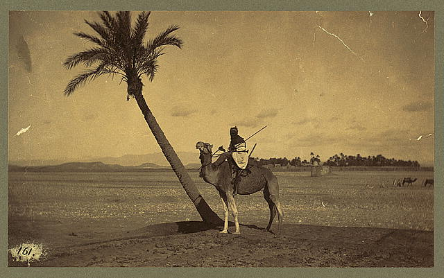 [Man on camel next to a slanting palm tree, desert in background]