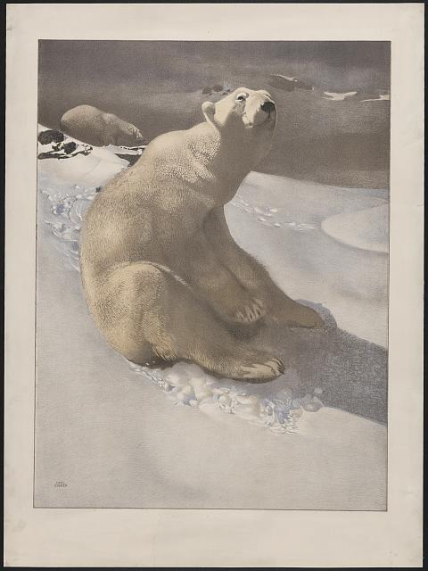 [A polar bear seated on snow and another polar bear walking in background]