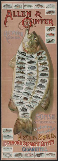Allen & Ginter, Richmond, Virginia. 50 fish from American waters. You will catch one in each package of Virginia Bright, ... cigarettes