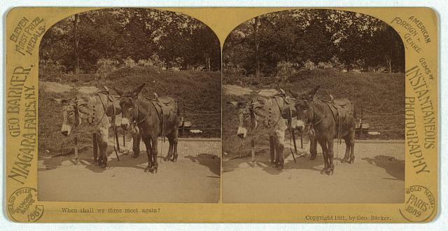 [Two donkeys wearing saddles]