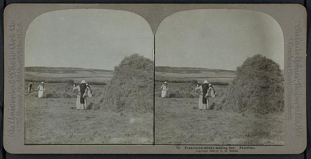 Franciscan monks making hay, Palestine