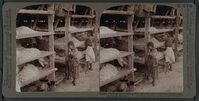 Cooling and drying silk cocoons after deadening process, Antioch, Syria