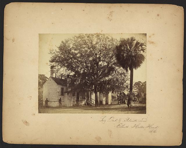 Live oak and palmetto tree, Elliot's Hilton Head, S.C.