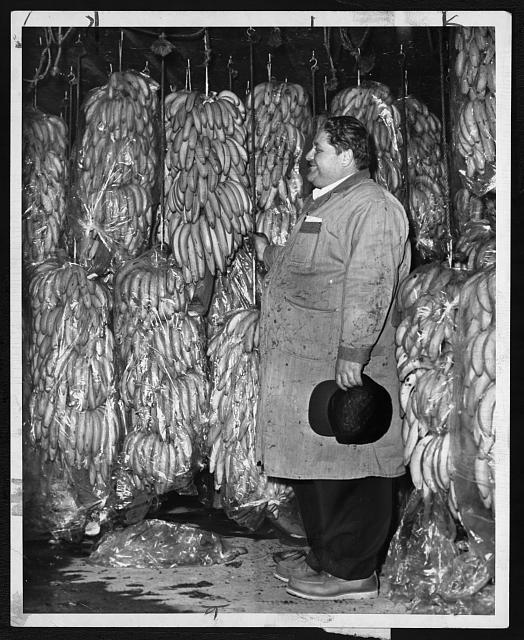 [Sy Bayman, manager of Curatolo Banana Corp., in the refridgerator with rows of stored bananas]