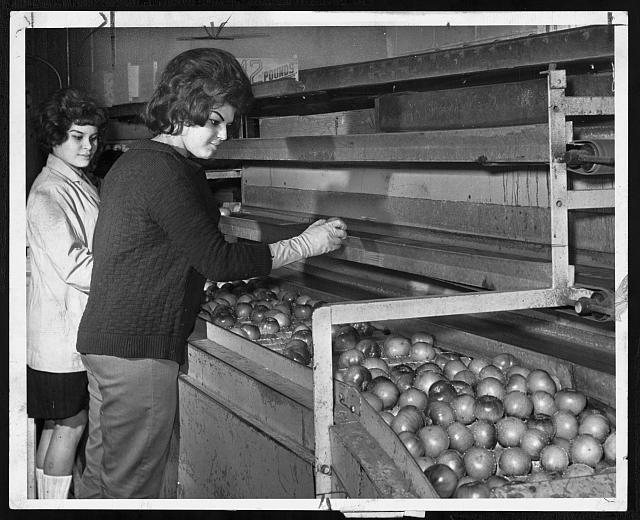 [Women at Iris Fruit Corp. sort tomatoes for packing at the Brooklyn Terminal Market]