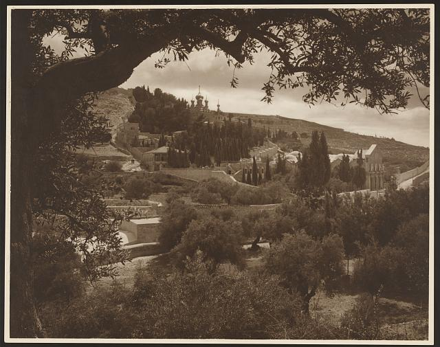 [Mount of Olives, Jerusalem, showing olive and cedar trees, the Basilica of Gethsemane, and Russian Othodox Church of the Magdalene in the distance]