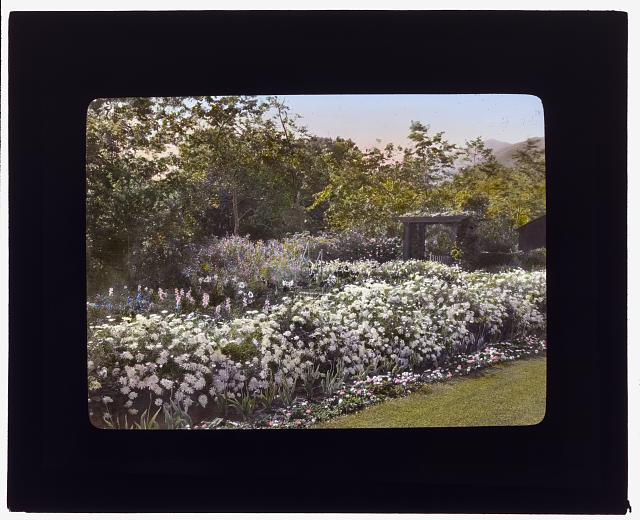 "[""Glen Oaks,"" James Hobart Moore house, East Valley Road, Montecito, California. Pyrethrum border]"
