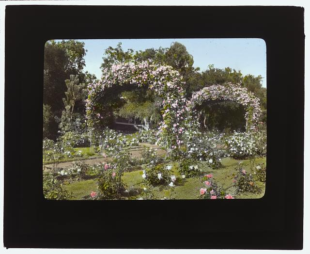 "[""Glen Oaks,"" James Hobart Moore house, East Valley Road, Montecito, California. Rose garden]"