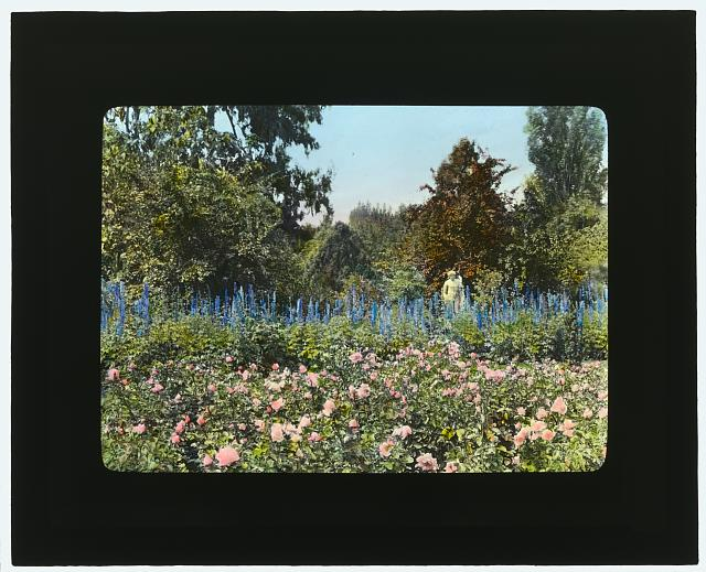 "[""Newmar,"" Senator George Almer Newhall house, 1761 Manor Drive, Hillsborough, California. Rose garden]"