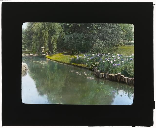 "[""Marshfield,"" George Woodward Wickersham house, Cedarhurst, New York. Pond edge below house in Japanese garden]"