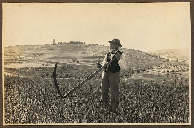 [American Colony member Josef Larsson, standing in field on Mount Scopus, holding scythe, Jerusalem]