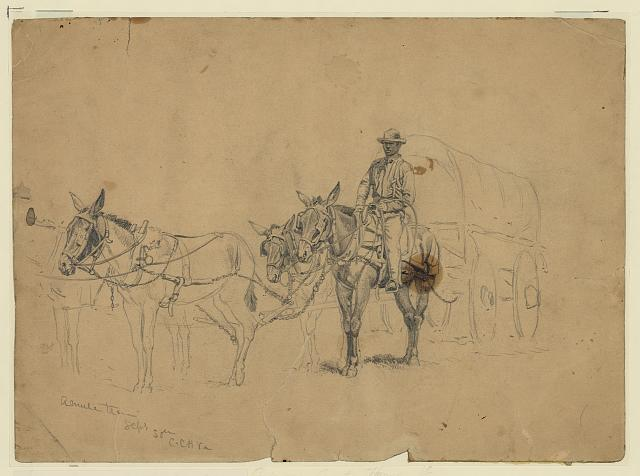 Study of a mule team and wagon, with driver