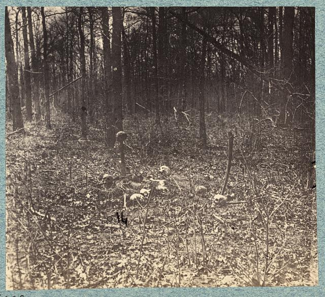 Skulls and bones of unburied soldiers on south side of Plank Road in 1865