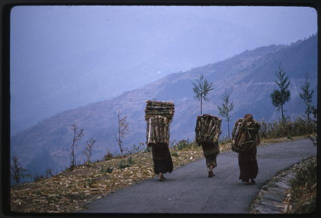 [People carrying wood on their backs as they walk along a mountain road, Lachung, Sikkim]